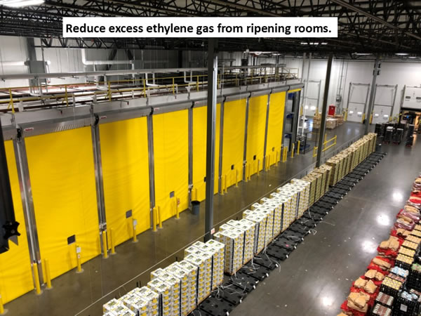 ripening room to reduce ethylene gas
