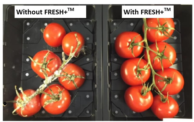 vine tomato with and without fresh plus